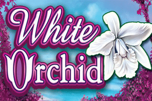 White Orchid Slot Machine App